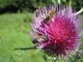 abeille1711